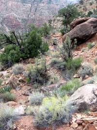 Tanner vegetation